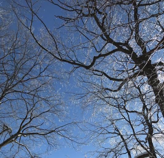 冬のケベックでは、木の枝までもが凍ります。東京では見ることのできない景色です。