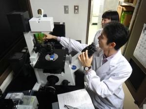 蛍光顕微鏡を使った実験風景
