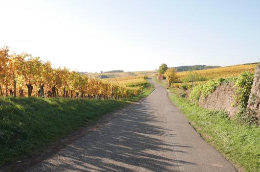 電車で約1時間の郊外、一面のブドウ畑。ストラスブールはアルザスワインの主な産地の一つです。