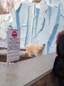 白熊は元気でした。