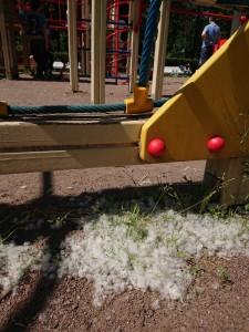 公園の遊具の脇にも綿毛が積もっています